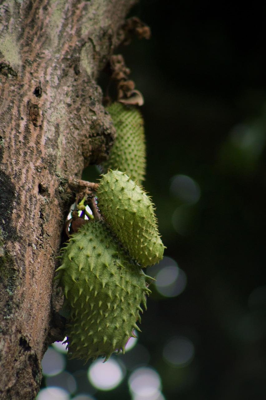 Guanabana Weizengras Smoothie